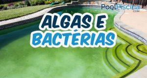 Algas e bactérias na piscina
