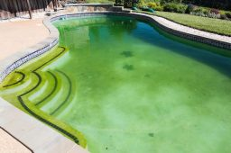 Algas e bactérias na piscina. O que fazer?