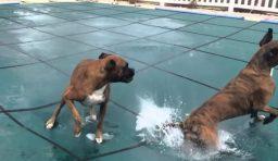 Animais de estimação na capa da piscina