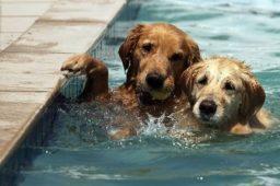 Cuidados com animais de estimação na piscina