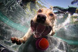 Animais de estimação na piscina
