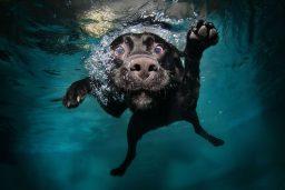 Animais na piscina