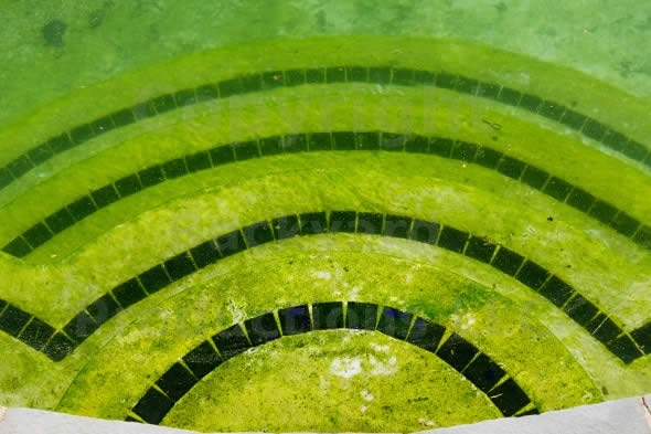 Eliminando algas amarelas da piscina