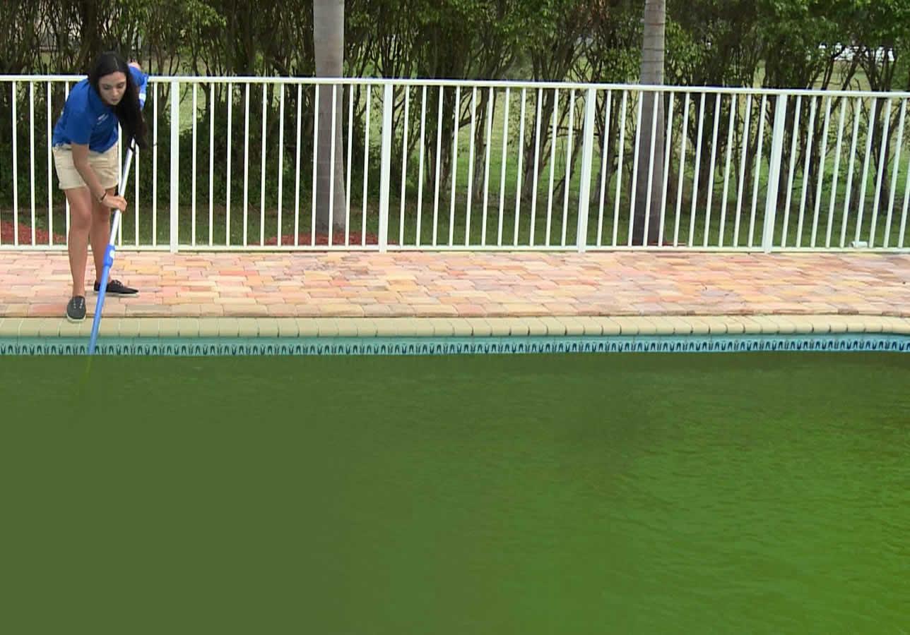 Como eliminar as algas da piscina